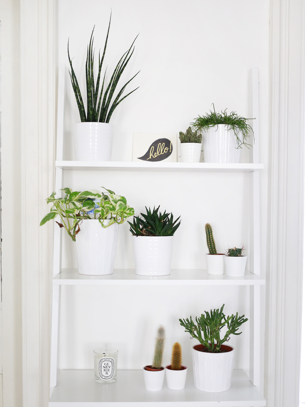 Plants in Kate La Vie's Apartment