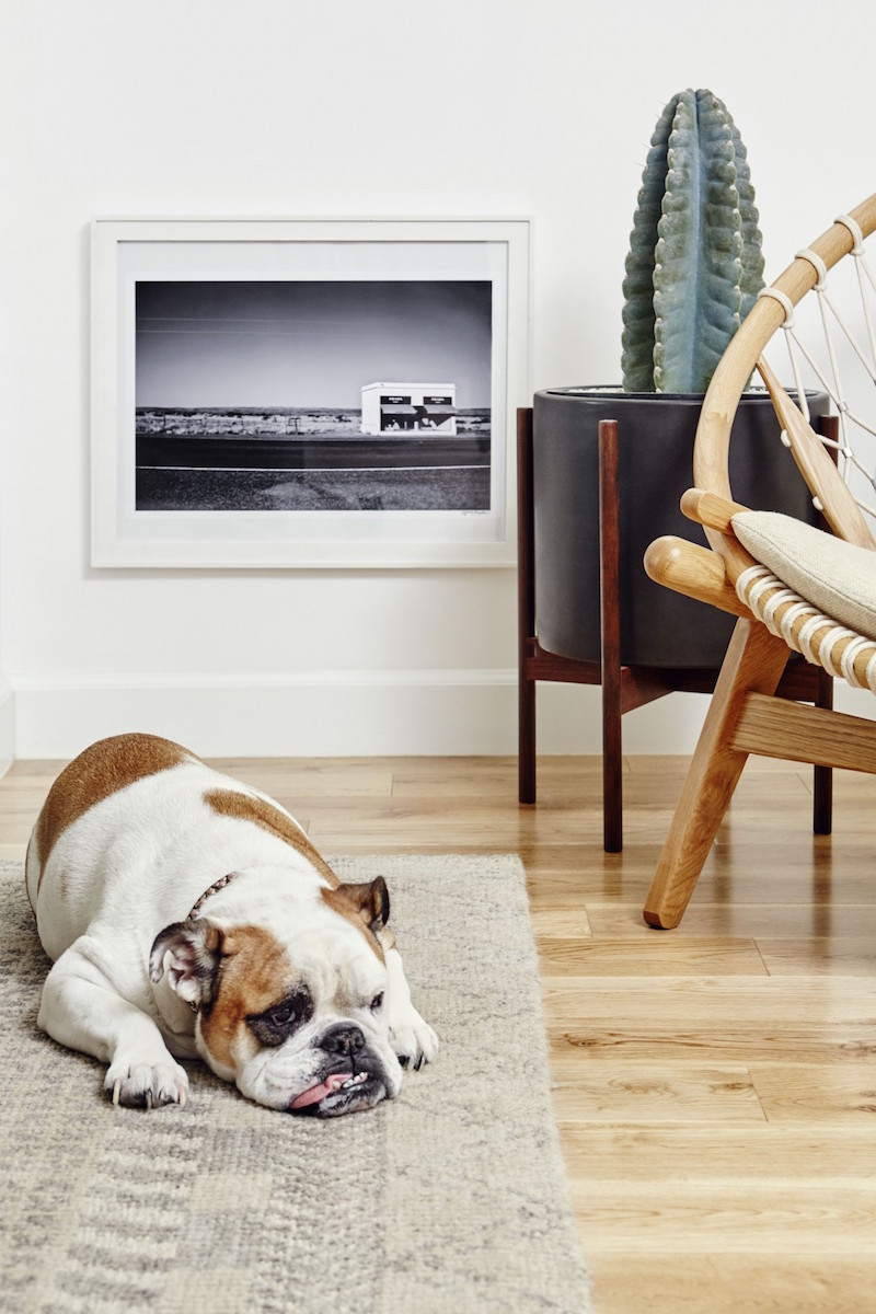 Jacey Duprie's Dog via Damsel in Dior