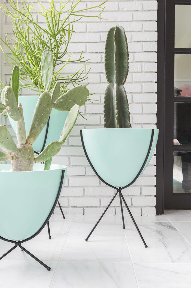 Cactus inside turquoise bowls via Alyssa Rosenheck