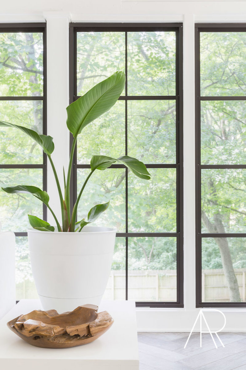 Indoor house plant near black frame windows via Alyssa Rosenheck