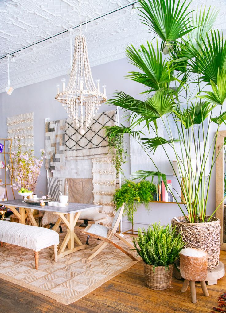 Large palm tree inside bohemian dining room