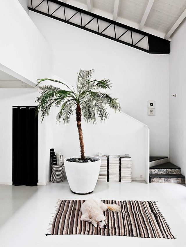Large palm tree inside white urn via The Happy Hill Blog