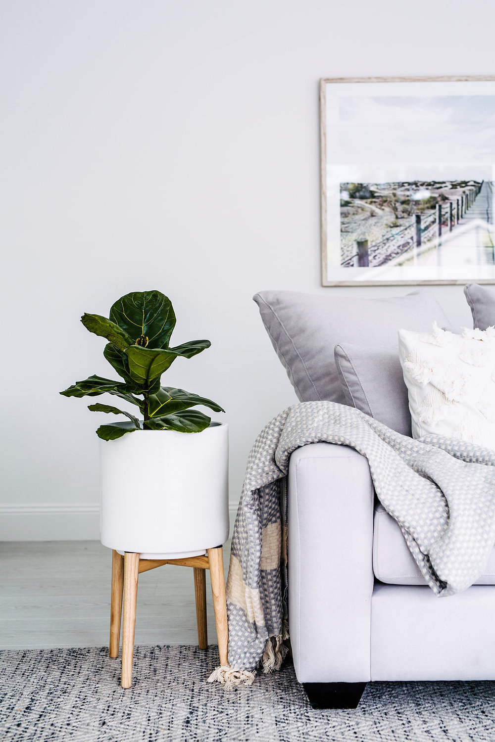 Living room with grey sofa white potted plant