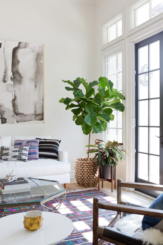 Large House Tree Next To White Sofa In Bohemian California Living Room