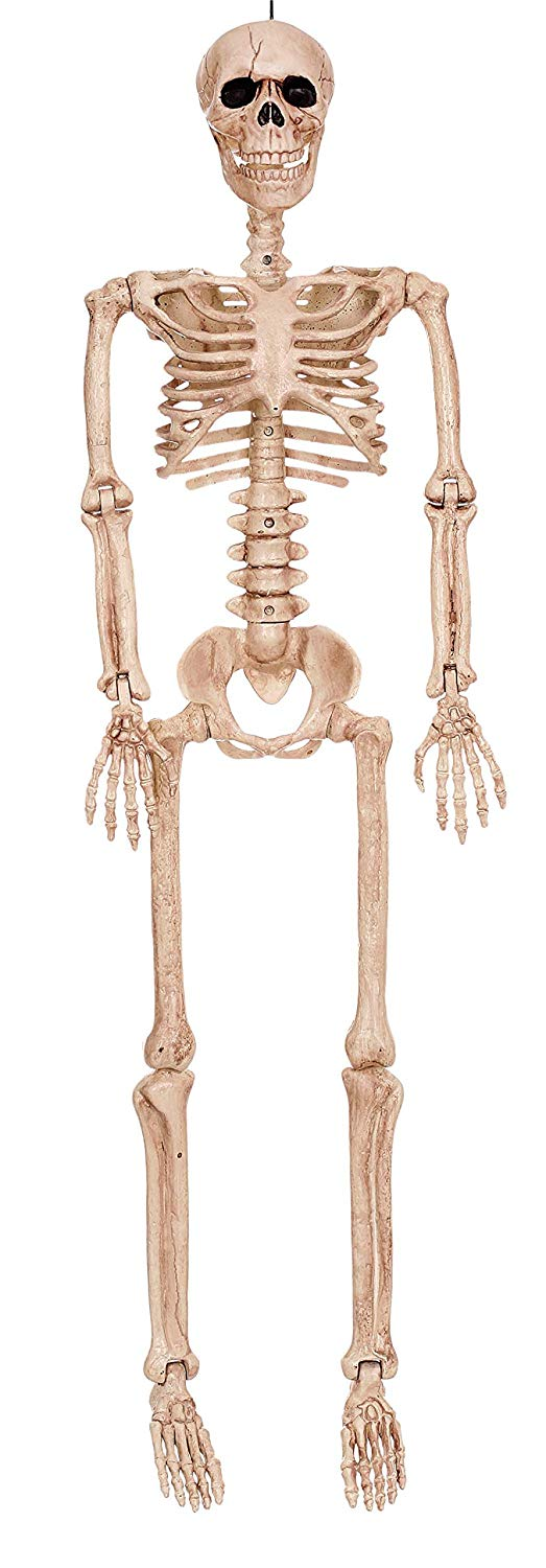 Affordable Halloween Decor - Posable Human Skeleton