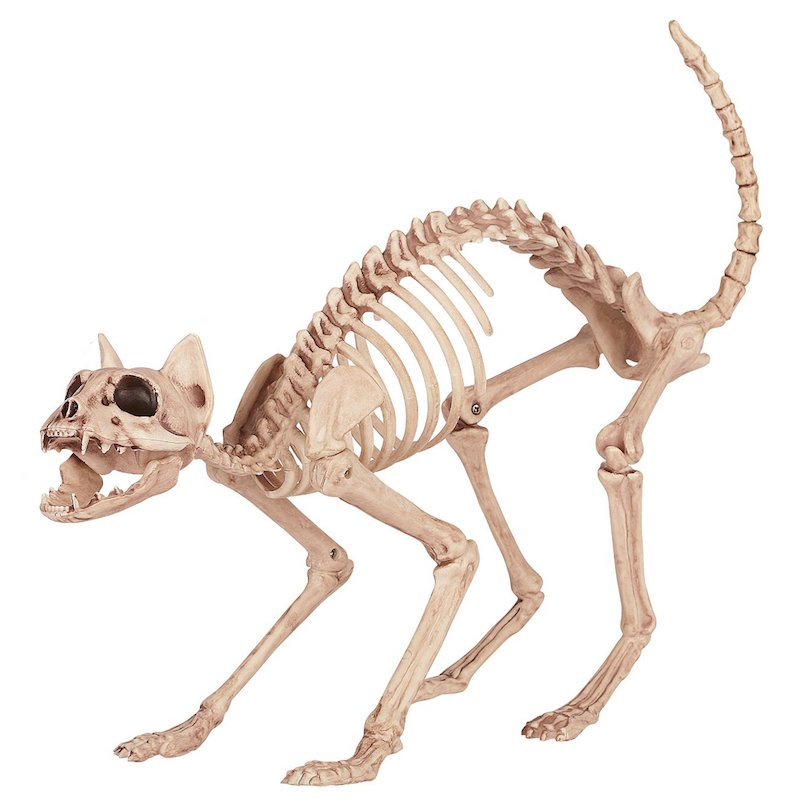 Affordable Halloween Decor - Skeleton Cat