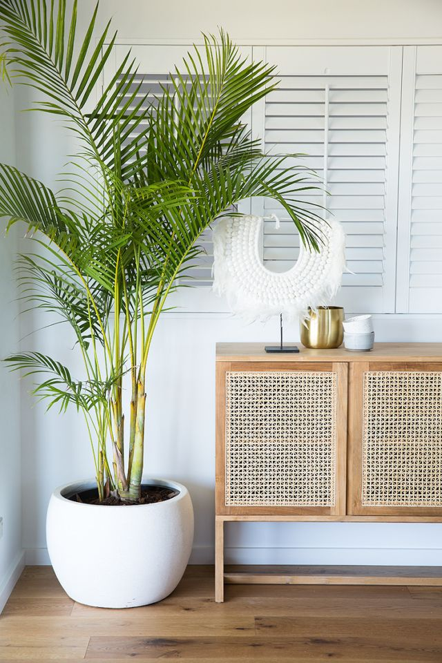Naturpflanzen mit tropischem Sideboard Rattan Dekor